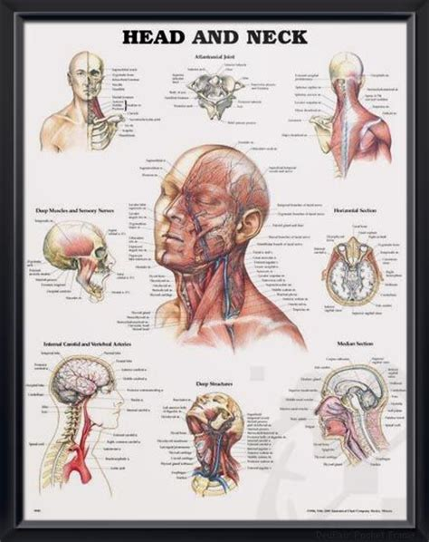 persistant head and facial pain jpg 439x554
